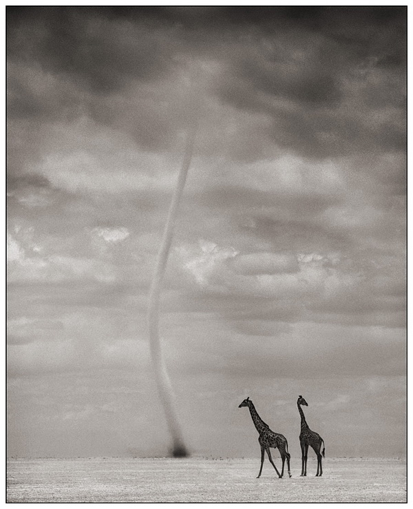 Photographer Nick Brandt
